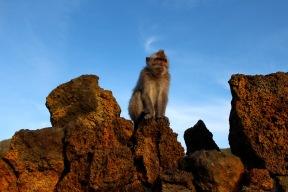 Monkey atop Mt Batur